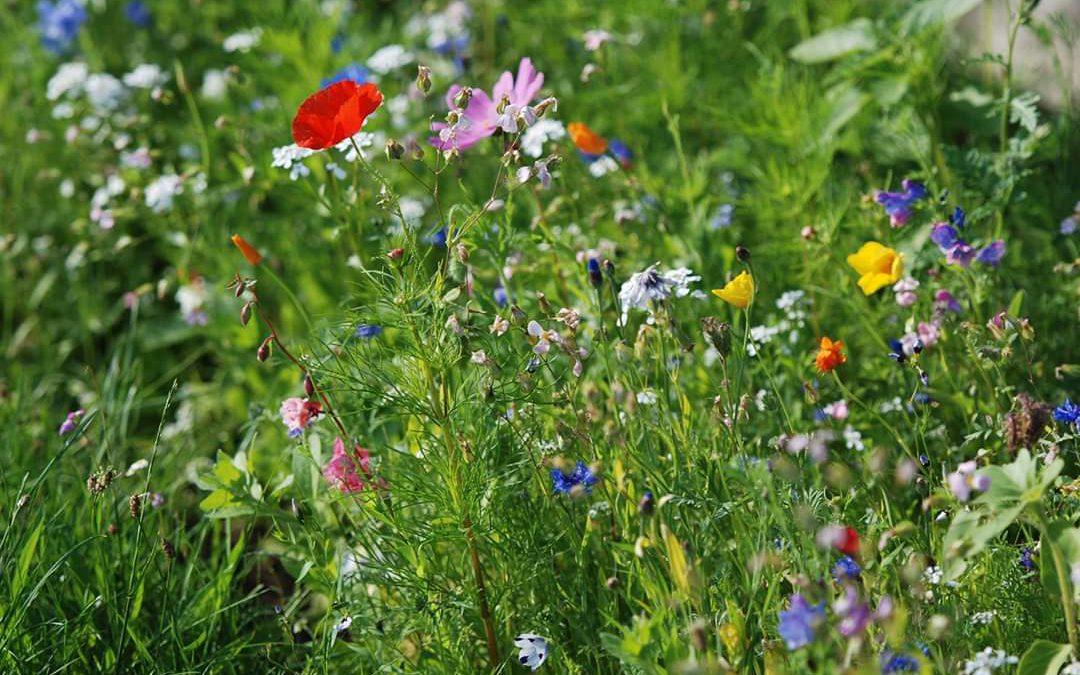 Wildblumen für Zuhause